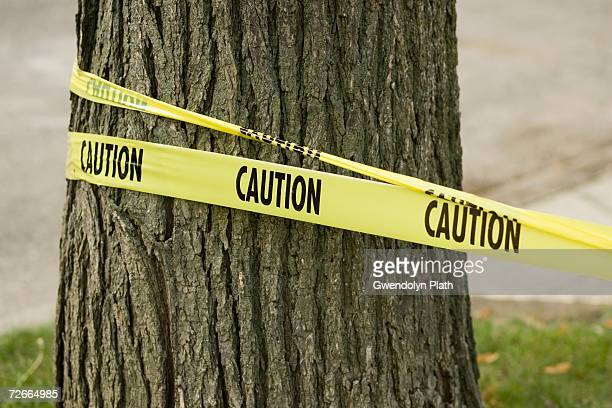 caution tape wrapped around tree - cordon tape stock pictures, royalty-free photos & images