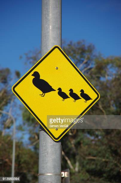 caution warning ducks crossing ahead traffic sign - animal crossing stock pictures, royalty-free photos & images