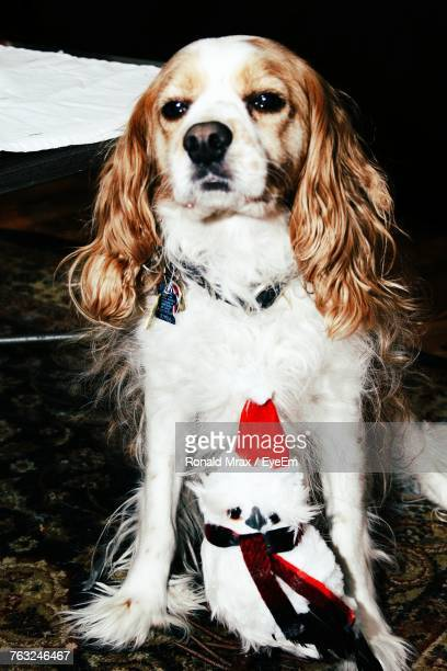 cavalier king charles spaniel with owl sculpture on field - chouette blanche photos et images de collection