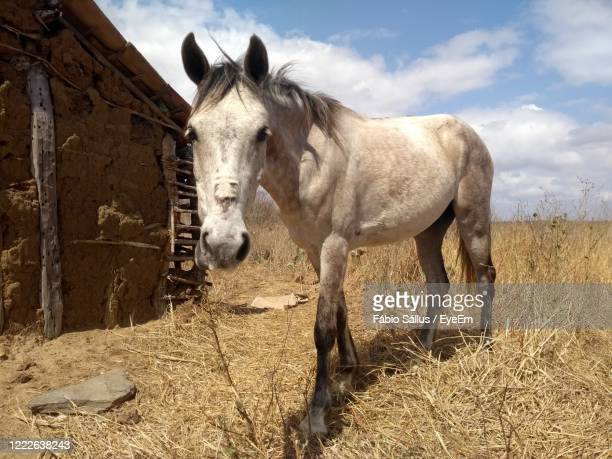 cavalo, selvagem, agricultura, alazão - animal selvagem stock pictures, royalty-free photos & images