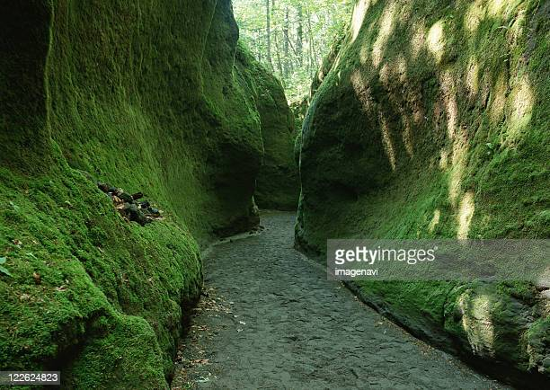 cave opening of moss - hokkaido stock pictures, royalty-free photos & images