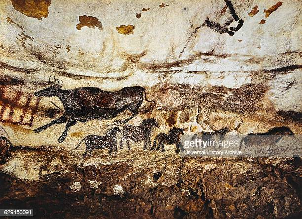 Cave Painting of Cow Horses Lascaux France
