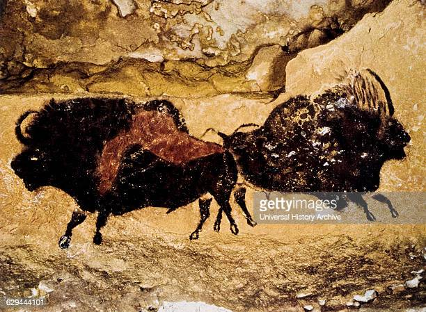 Cave Painting Two Prehistoric Bison Lascaux France