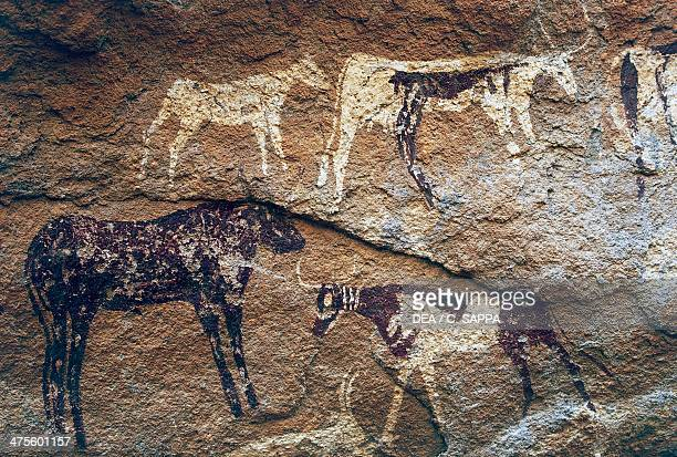 Cave paintings depicting cattle prehistoric caves on the Gilf Kebir plateau Western Libyan Desert Egypt