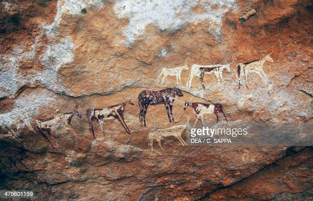 Cave paintings depicting cattle prehistoric caves on the Gilf Kebir plateau Western Libyan Desert Egypt