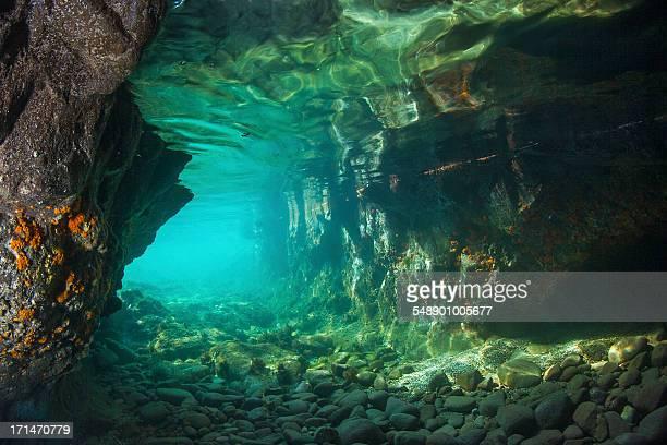 cave - pianta acquatica foto e immagini stock