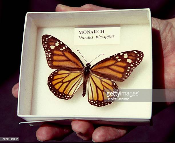 CAVectorButterflyRDL A close–up of a monarch butterfly on display at the Orange County Vector Control Dristrict in Garden Grove TIMES PHOTO ROBERT...