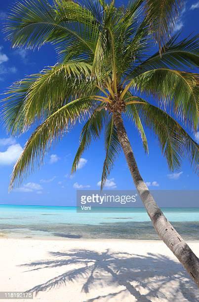 Cayman Islands Scenic