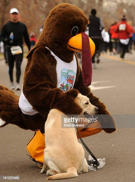 cd27turkeytrot_bb_3 The dogs joined thousands of runners in Washington Park many dressed in the day's theme to benefit the Mile High United Way in...