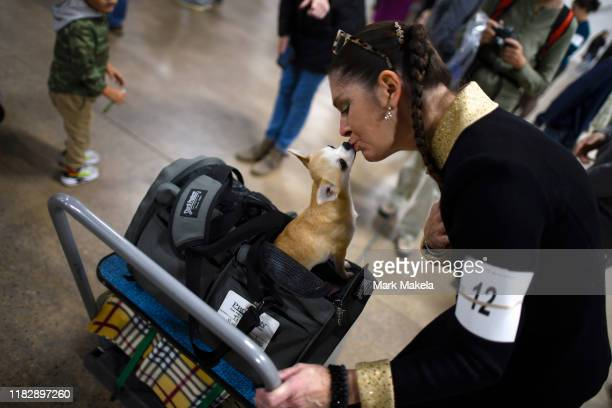 Cecilia Bozzo kisses her Smooth Coat Chihuahua during the National Dog Show held at the Greater Philadelphia Expo Center on November 16 2019 in Oaks...