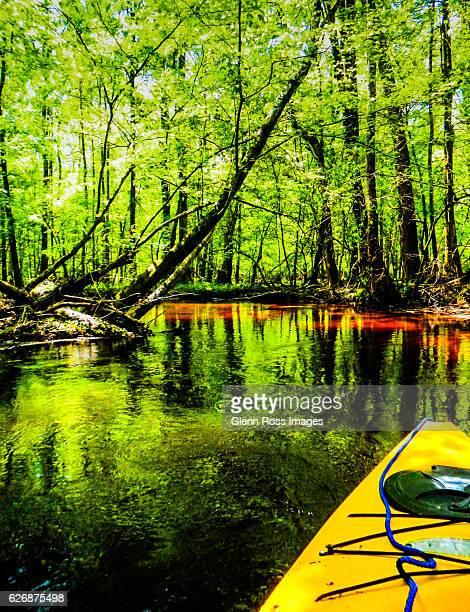 Cedar Creek, Congaree National Park, near Columbia, South Carolina