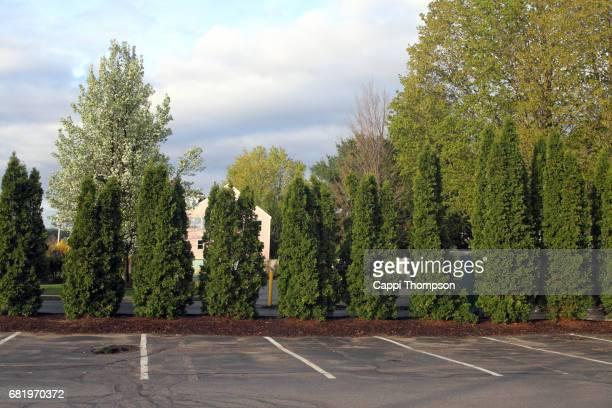 cedar hedge row - parkplatz stock-fotos und bilder