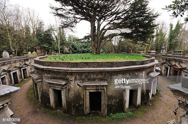 Cedar of Lebanon tree stands in the middle of the tombs and vaults of the famous Circle of Lebanon at Highgate Cemetery on April 17 2013 in London...