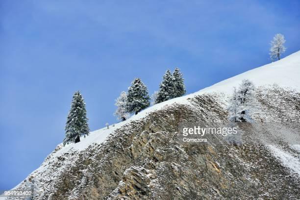 Cedar Trees at Mountain Ridge
