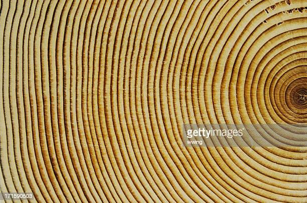 Anillos de crecimiento de madera de cedro