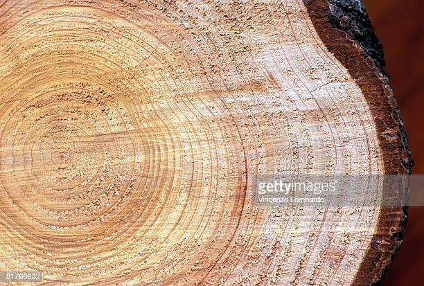 T, Cedar wood