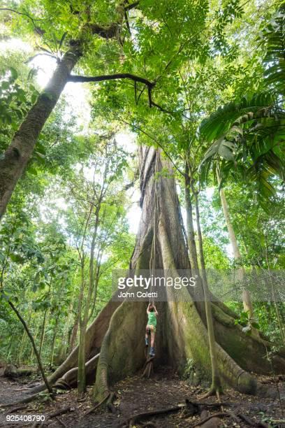 Ceiba Tree, Arneal Volcano National Park, Costa Rica