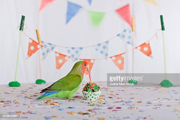 Celebrating animal birthday
