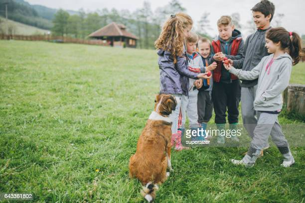 celebrating easter holiday - dog easter stock pictures, royalty-free photos & images