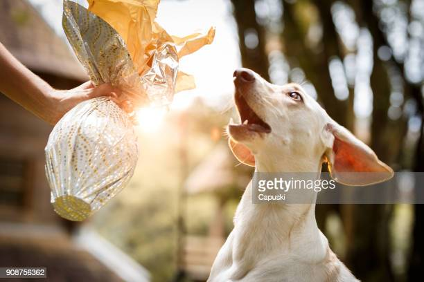 celebrating easter with dog - dog easter stock pictures, royalty-free photos & images