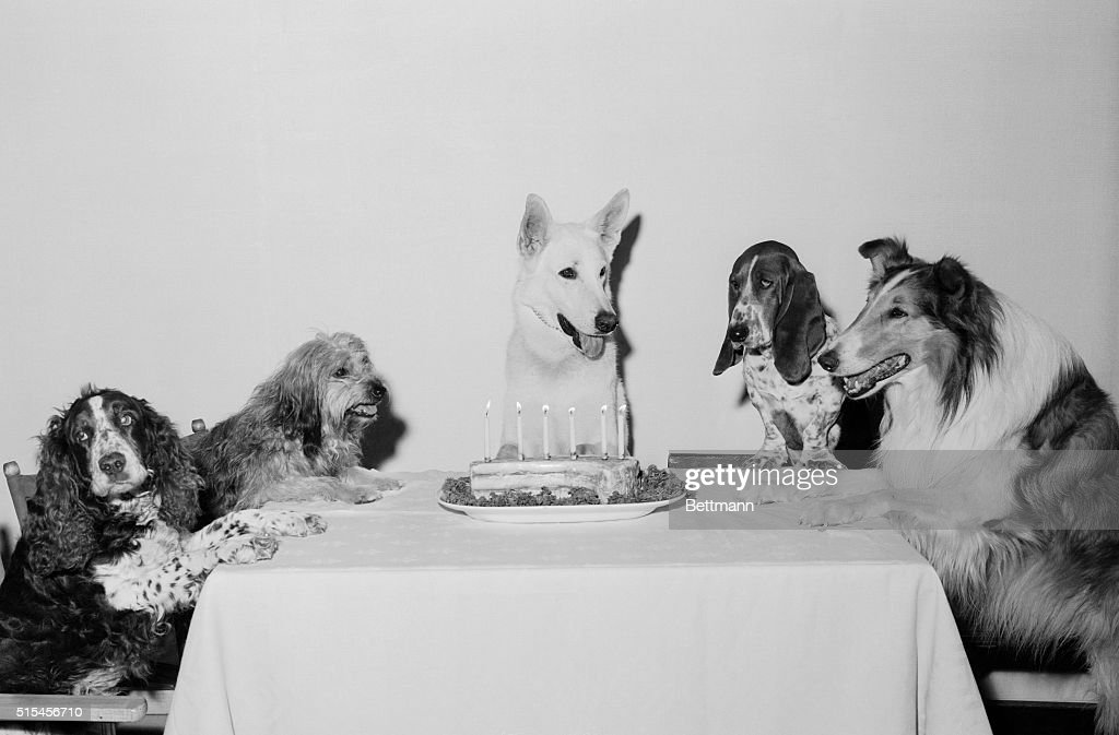 Movie Dog and Friends Celebrating Birthday : News Photo