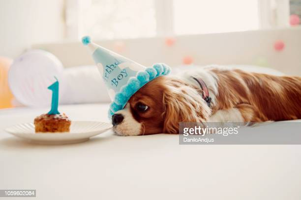 celebrating humans best friend birthday - first birthday imagens e fotografias de stock