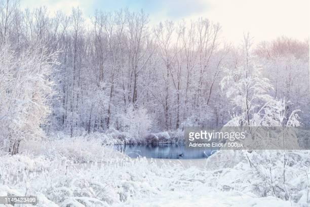 a celebration of snow - 水鳥 ストックフォトと画像