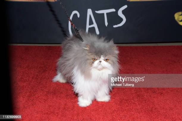 Celebrity cat Dewey the Persian attends the Los Angeles opening night performance of Cats at the Pantages Theatre on February 27 2019 in Hollywood...