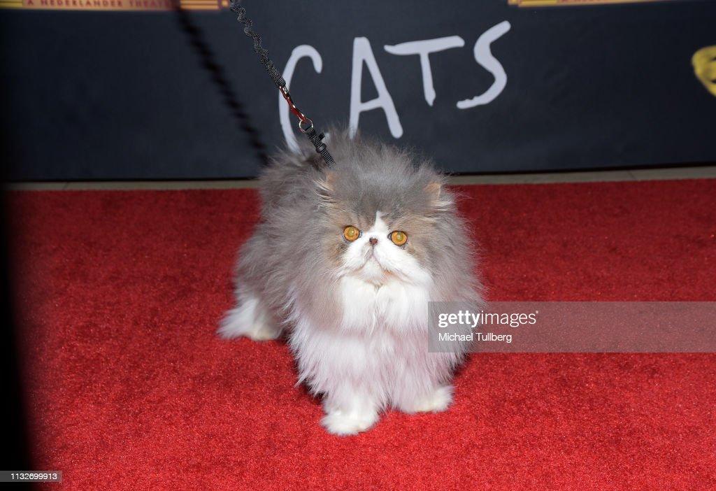 """Cats"" Opening Night Performance : News Photo"