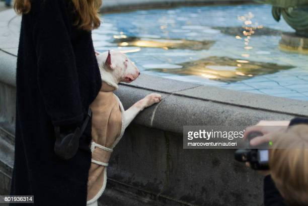 Celebrity dog in Trafalgar Square, London