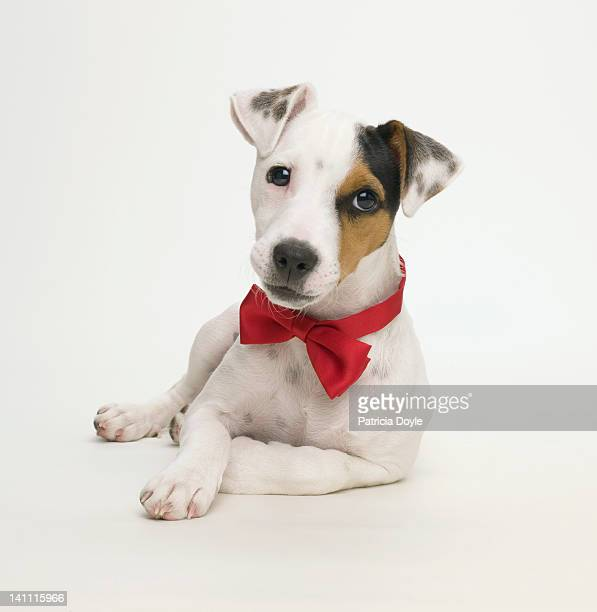 celebrity dog - celebrities stock pictures, royalty-free photos & images
