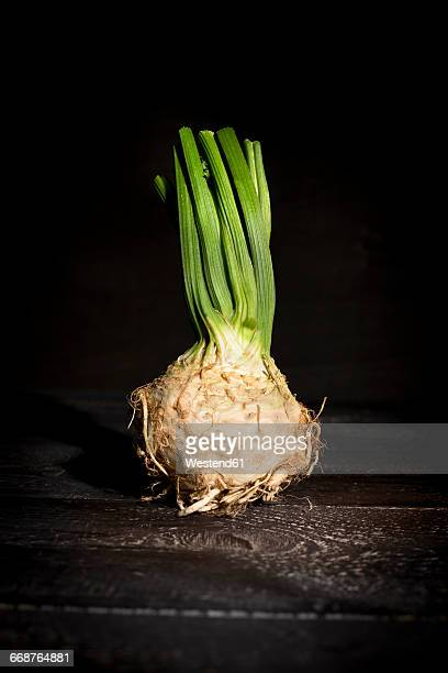 celeriac on dark wood - celeriac stock photos and pictures