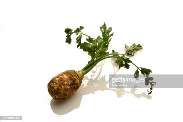 celery root - celeriac - fotografias e filmes do acervo