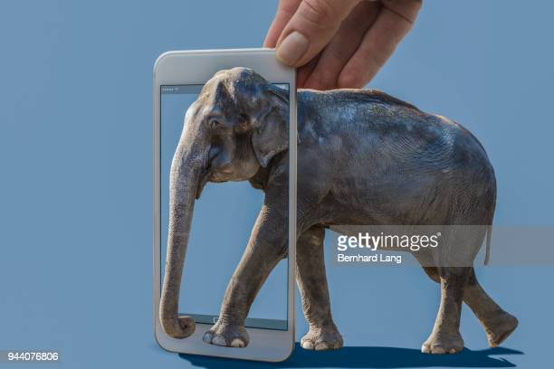 Cell Phone displaying elephant coming out of phone