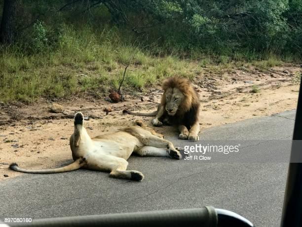 Cell phone Safari in Africa 5