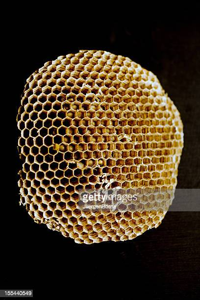 Cell structure of a wasp nest