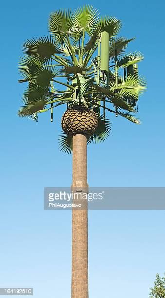 Cell tower disguised as palm tree in southern California