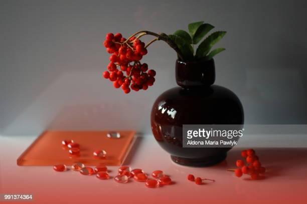 Celtic legend of the sacred rowan fruits falling i