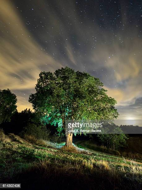 Celtis australis tree, over 100 years in the field illuminated by the light of the moon and a starry sky