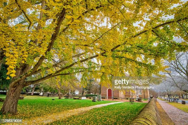 cemetery and ginkgo tree in fall - colonial williamsburg, virginia usa - williamsburg virginia stock pictures, royalty-free photos & images
