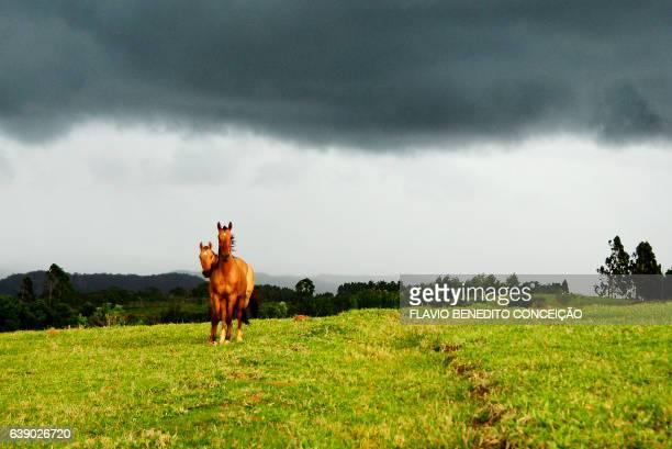 Cena Rural com cavalos em fazenda