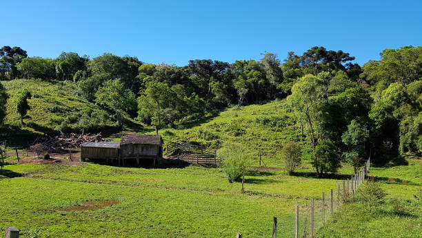 Cena rural nas proximidades de Gramado no sul do Brasil