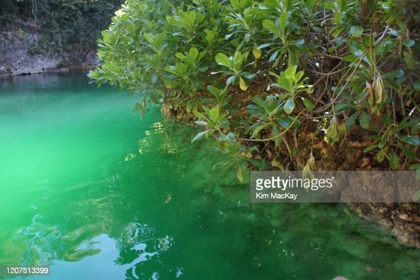 cenote las palmas in puerto morelos, mexico - bedrock stock pictures, royalty-free photos & images