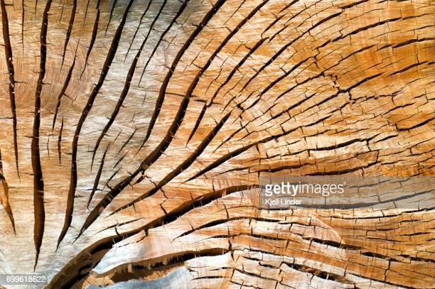 Center core of a eucalyptus log