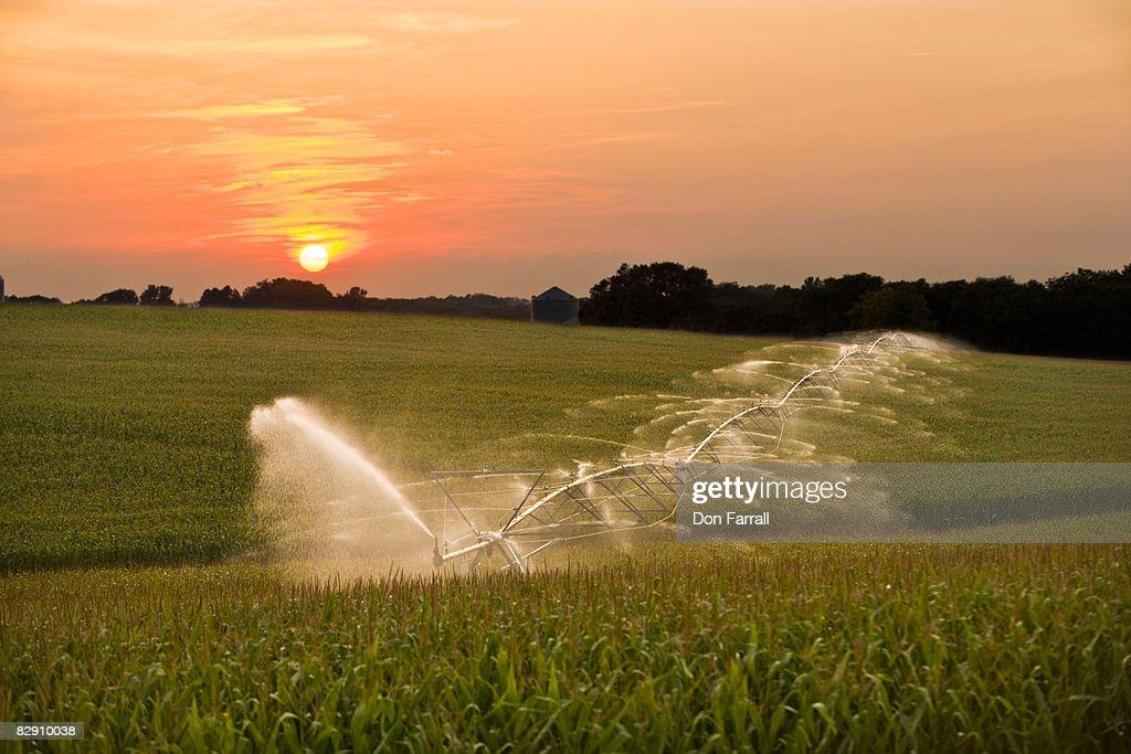 Center Pivot Irrigation corn field : Stock Photo