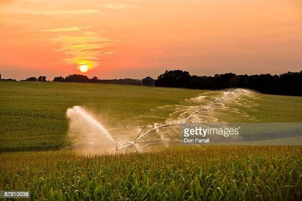 Center Pivot Irrigation corn field