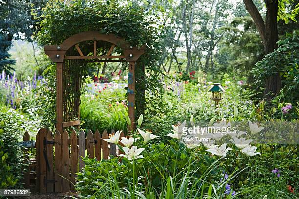 centerfold asiatic hybrid lily with vine covered arbor over gate leading to backyard garden - medford oregon stock photos and pictures