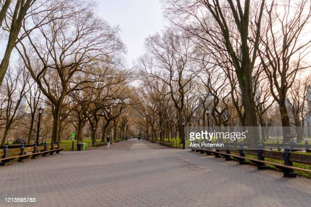 central alley in central park deserted because of coronavirus outbreak. - alex potemkin coronavirus stock pictures, royalty-free photos & images