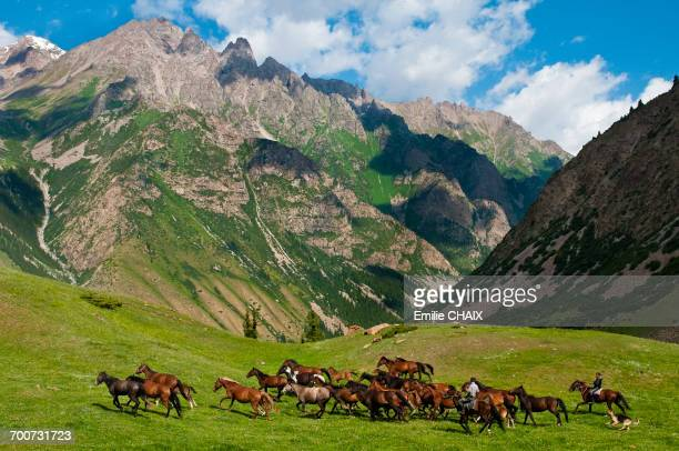 central asia, kyrgyzstan, issyk kul province (ysyk-k_l), juuku valley, the shepherd gengibek makanbietov leads his 24 horses in the mountains pasture - kyrgyzstan stock pictures, royalty-free photos & images