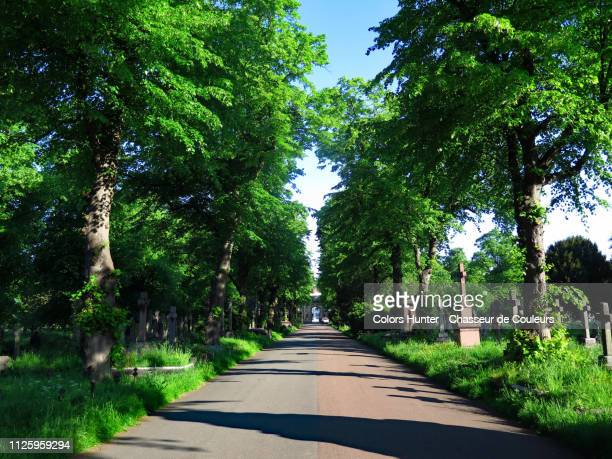 central footpath inside brompton cemetery - 散歩道 ストックフォトと画像